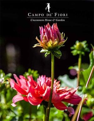 Fiori Campo.Catalog Campo De Fiori Naturally Mossed Terra Cotta Planters