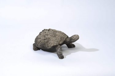 AGED LG SNAPPING TURTLE